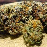 6 Best Strains of Medical Cannabis to Choose From