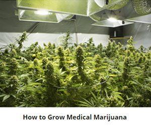 Online marijuana