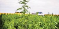 CBD is the New IT Crop and why – How the 2018 Farm Bill will Change the Odds?