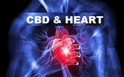 CBD Helps Heart