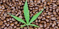 CBD Mixed with Caffeine, Is it Good for You? Here's What Research Says